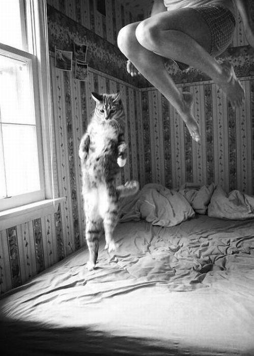 picture-cat01-171.jpg