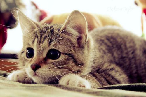 picture-cat01-173.jpg