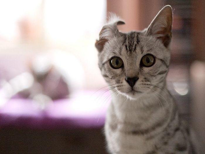 picture-cat01-176.jpg