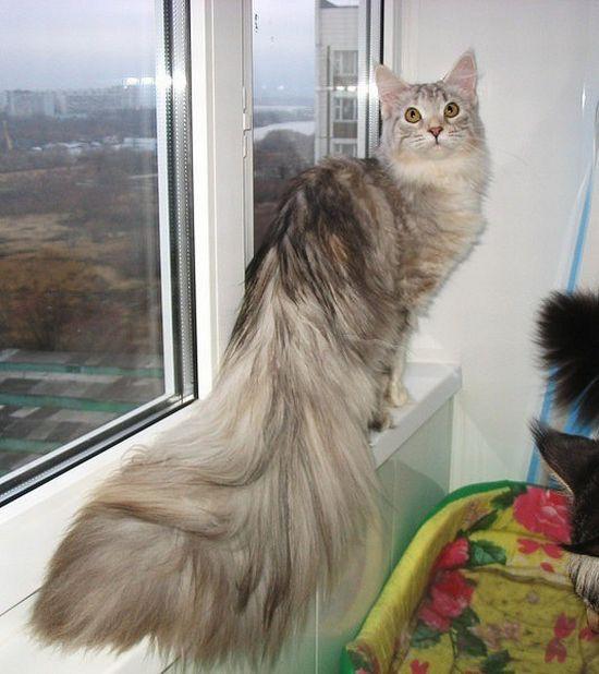 picture-cat01-180.jpg