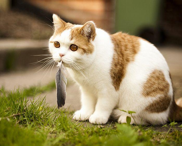picture-cat01-181.jpg