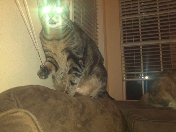 picture-cat01-184.jpg