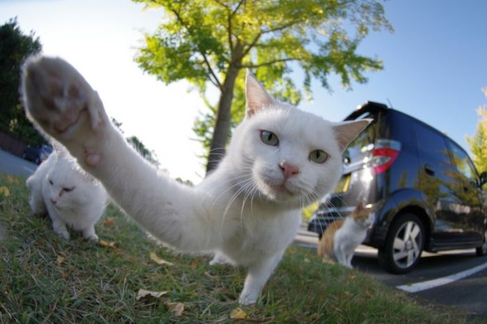 picture-cat01-186.jpg