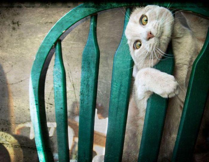 picture-cat01-188.jpg
