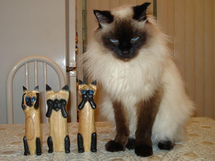 picture-cat01-189.jpg