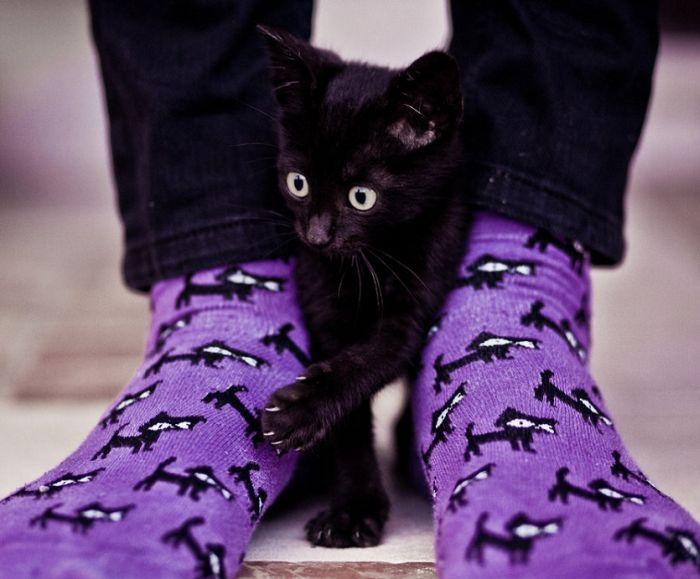 picture-cat01-193.jpg
