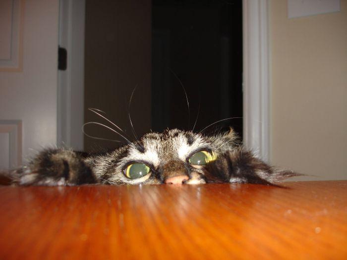 picture-cat01-194.jpg