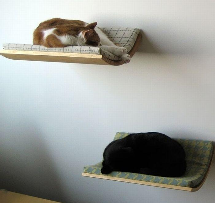 picture-cat01-197.jpg
