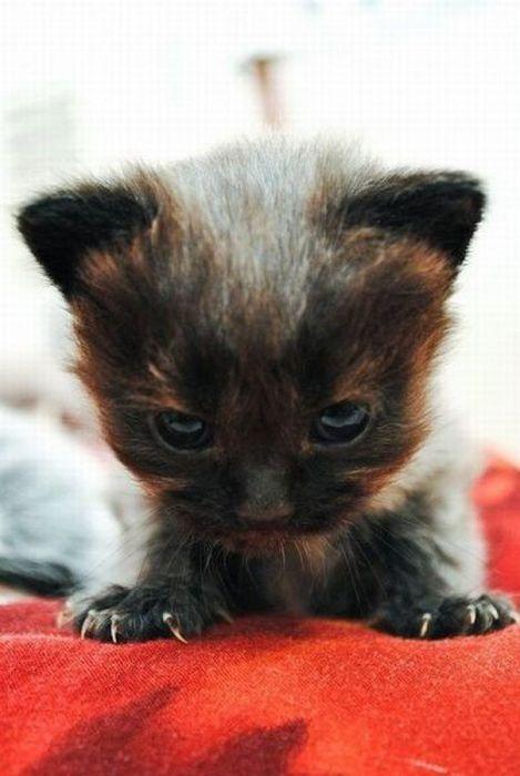 picture-cat01-198.jpg