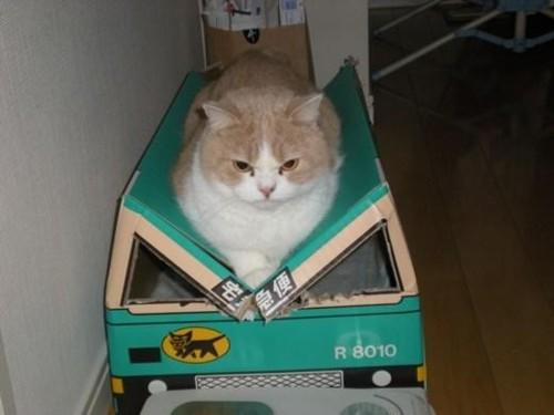 picture-cat01-201.jpg