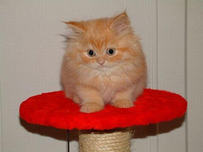 picture-cat01-202.jpg