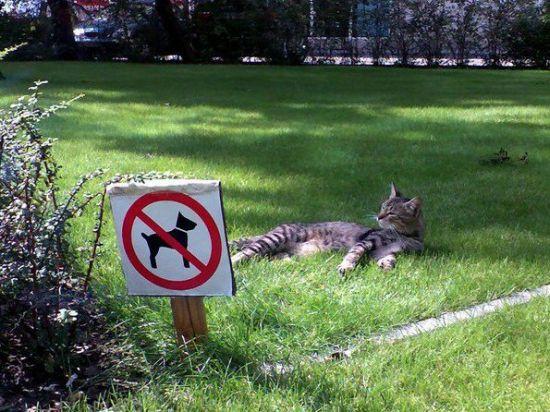 picture-cat01-204.jpg