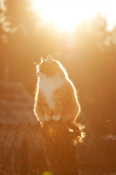 picture-cat01-205.jpg