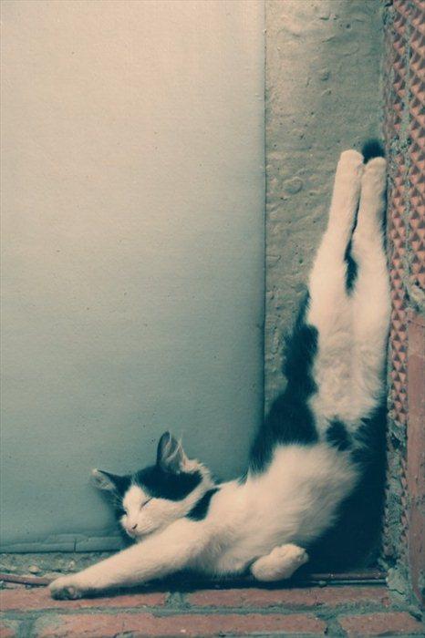 picture-cat01-206.jpg