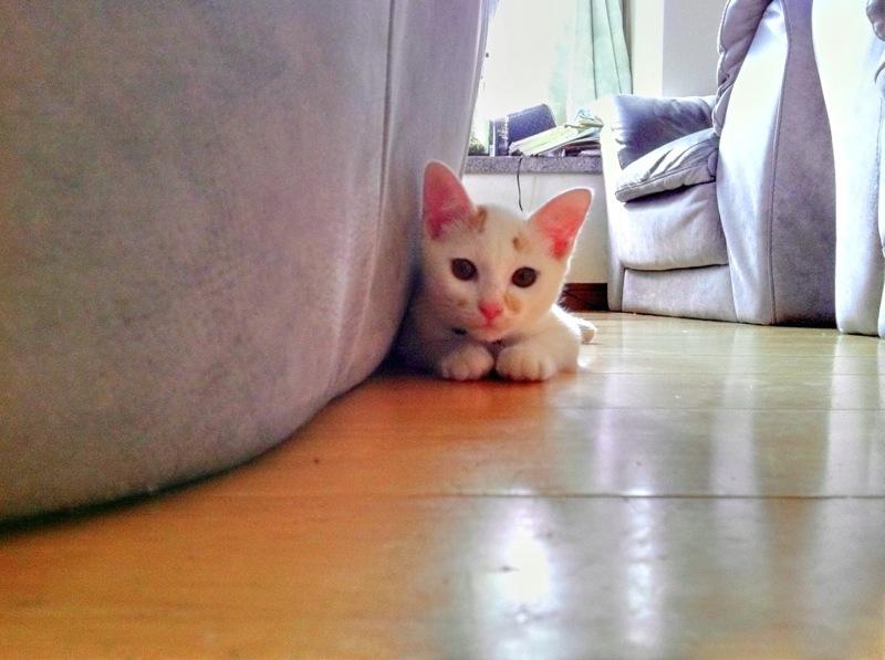 picture-cat01-207.jpg