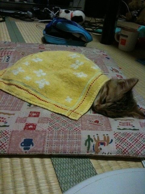 picture-cat01-208.jpg