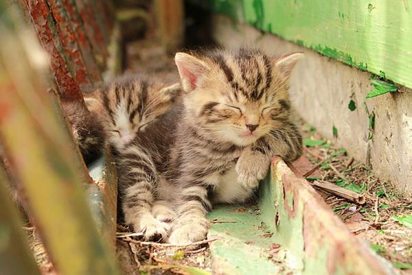 picture-cat01-209.jpg