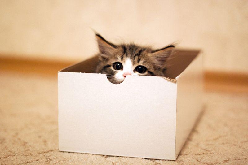 cat3-001.jpg