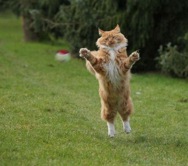 cat3-002.jpg