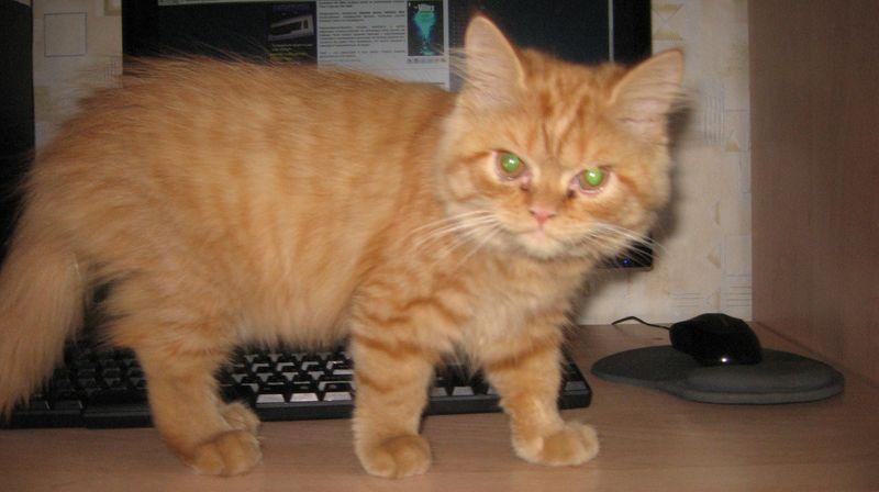 cat3-004.jpg