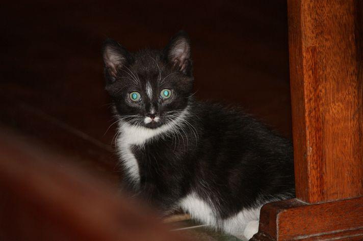 cat3-005.jpg