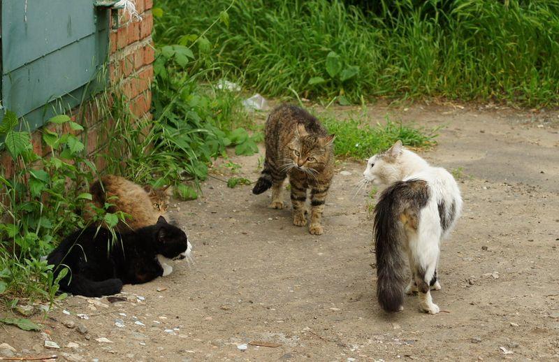 cat3-006.jpg