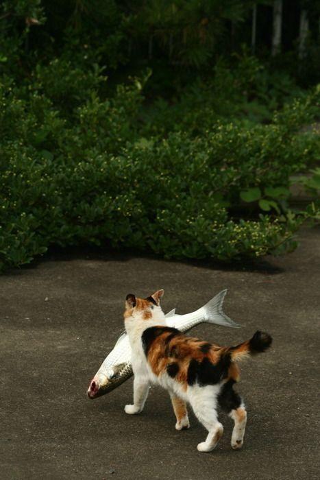 cat3-009.jpg