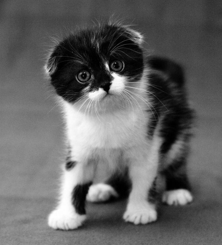 cat3-013.jpg