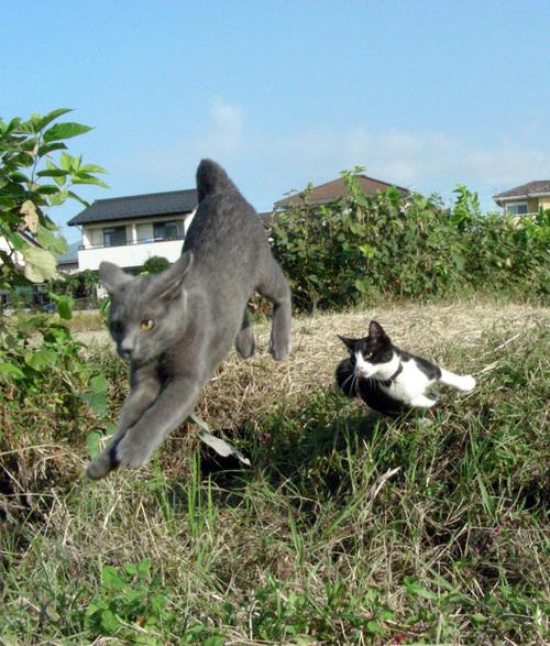 picture-cat01-214.jpg