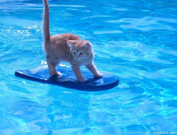 picture-cat01-215.jpg