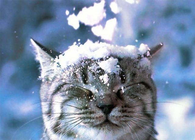 picture-cat01-216.jpg