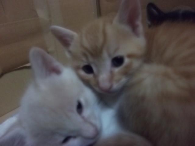 picture-cat01-219.jpg