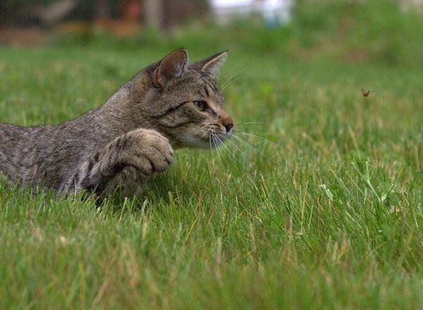 picture-cat01-223.jpg