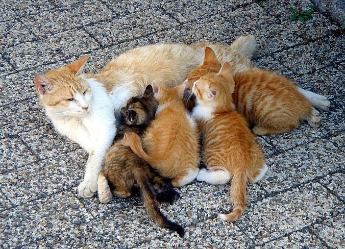picture-cat01-228.jpg