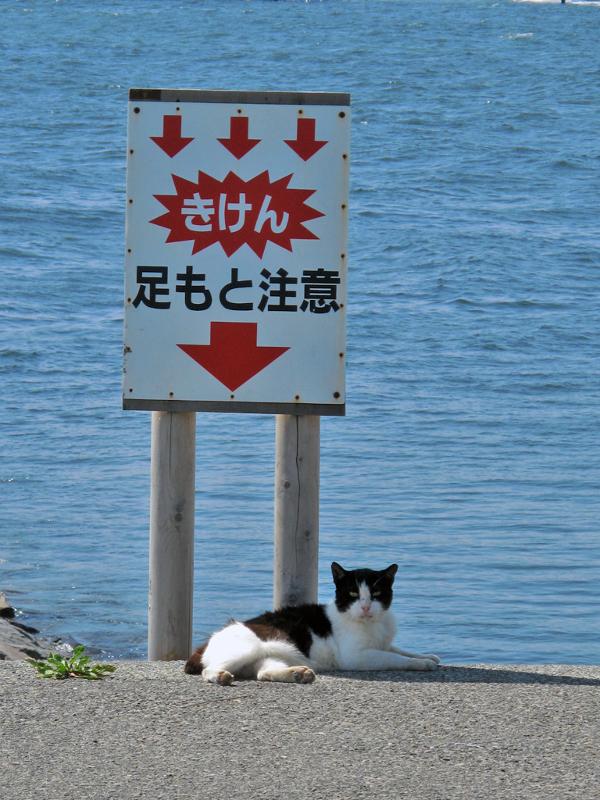 picture-cat01-279.jpg