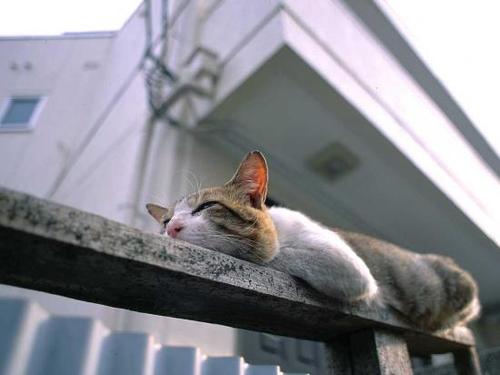 picture-cat01-232.jpg