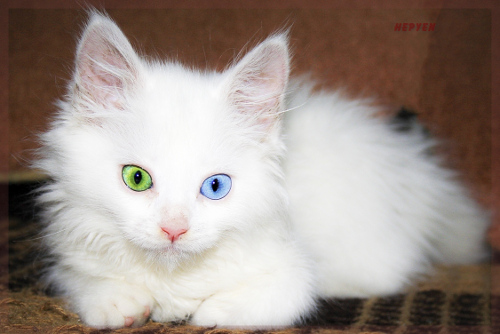 picture-cat01-233.jpg