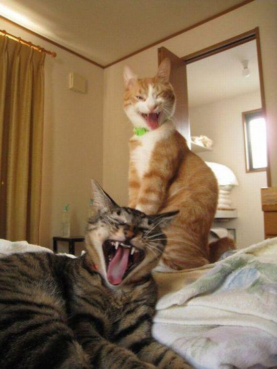 picture-cat01-235.jpg