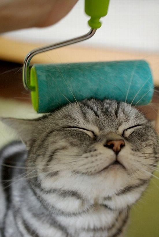 picture-cat01-237.jpg