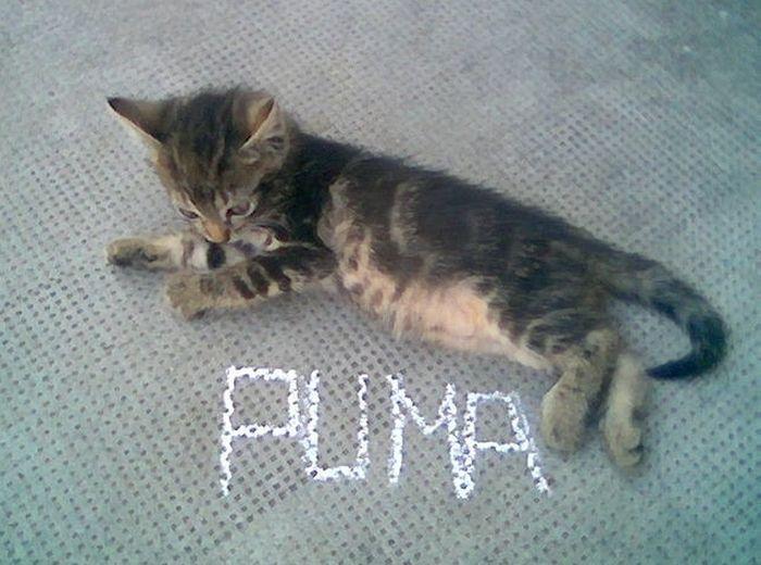 picture-cat01-238.jpg