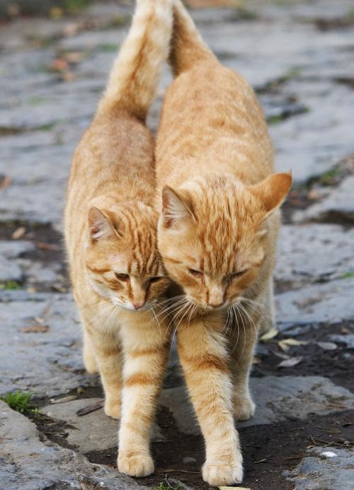 picture-cat01-277.jpg