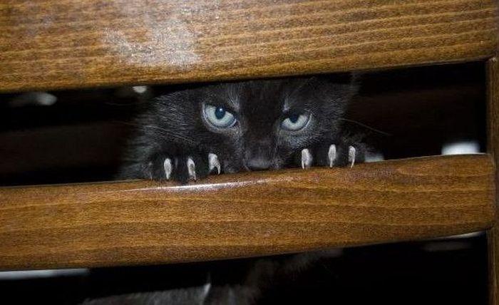 picture-cat01-241.jpg