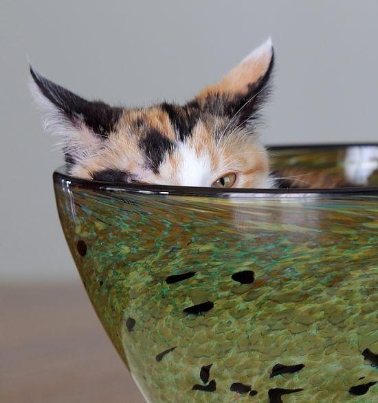 picture-cat01-242.jpg
