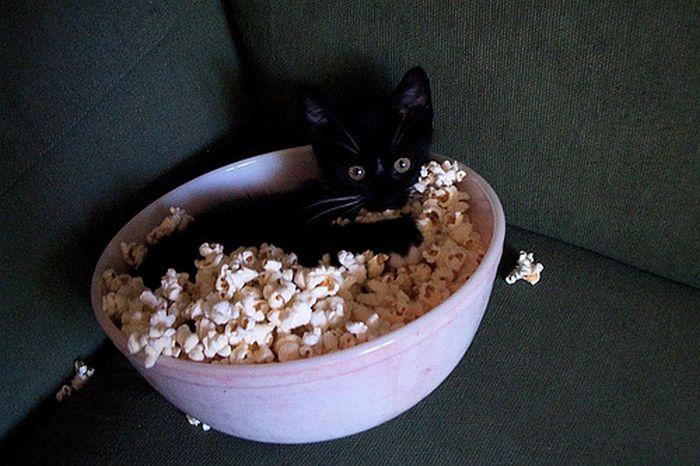 picture-cat01-252.jpg