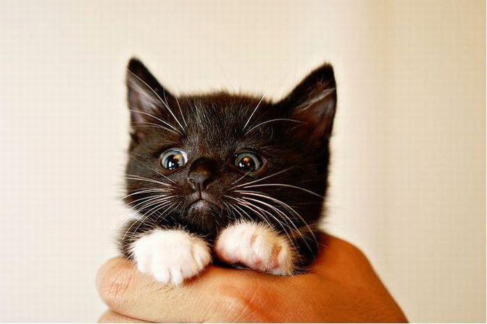 picture-cat01-254.jpg