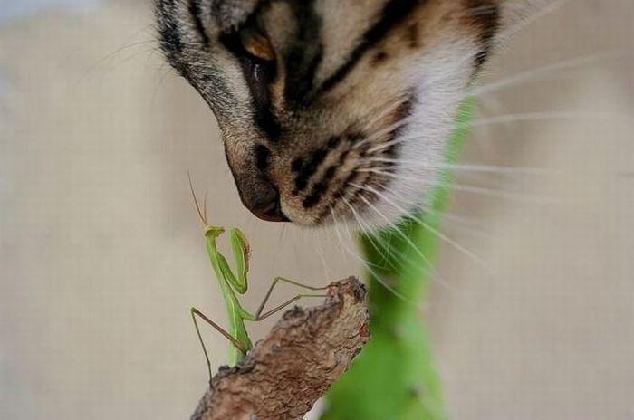picture-cat01-255.jpg