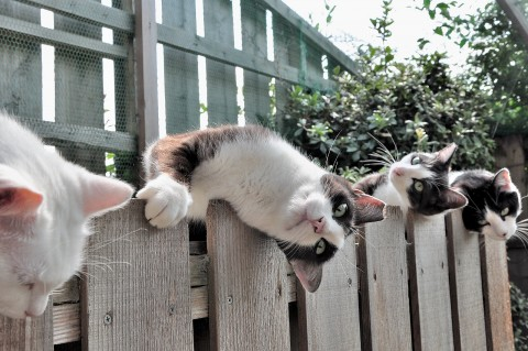 picture-cat01-269.jpg