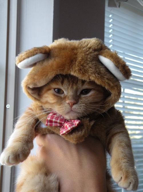 picture-cat01-271.jpg