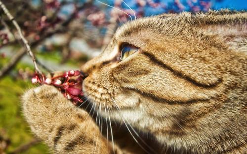 picture-cat01-272.jpg