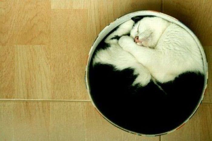 cat4-004.jpg